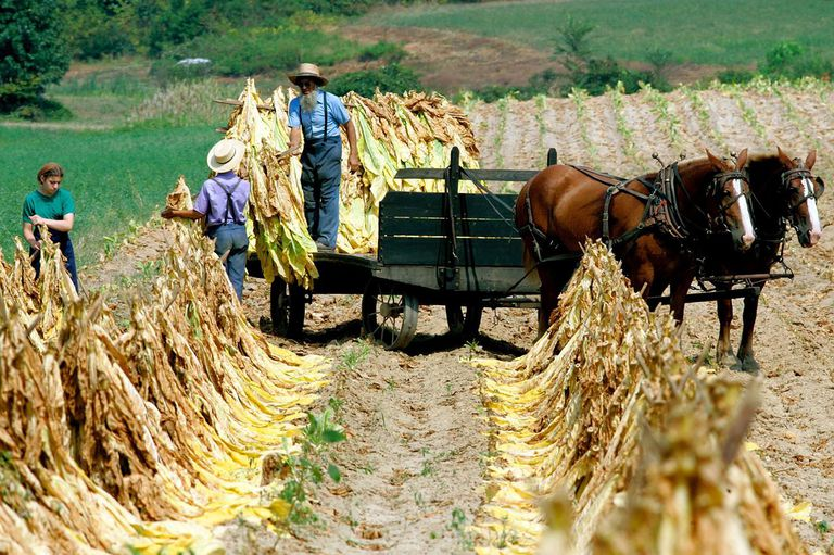 Amish People in Pennsylvania