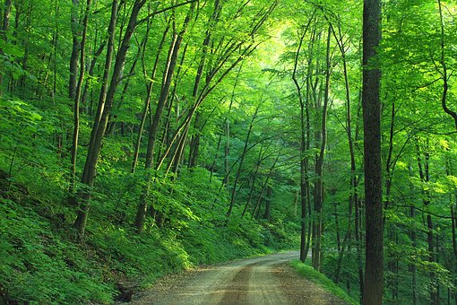 Wälder in Pennsylvania